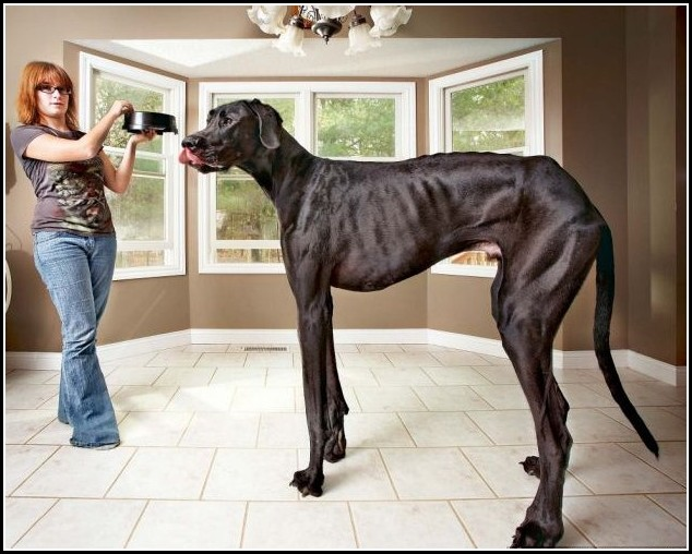 Big Dogs In The World