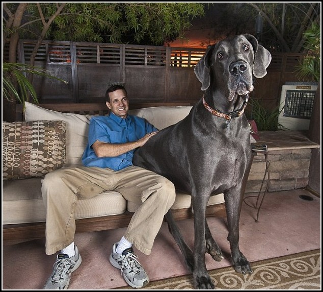 Big Dogs Photos