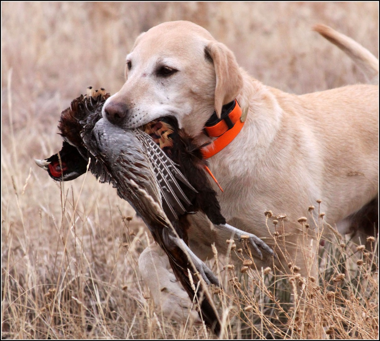 Bird Dogs Hunting