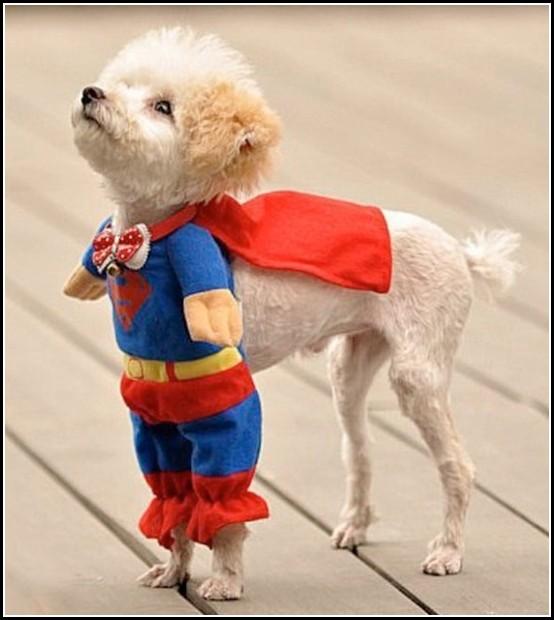 Chiwawa Dog Halloween Costumes