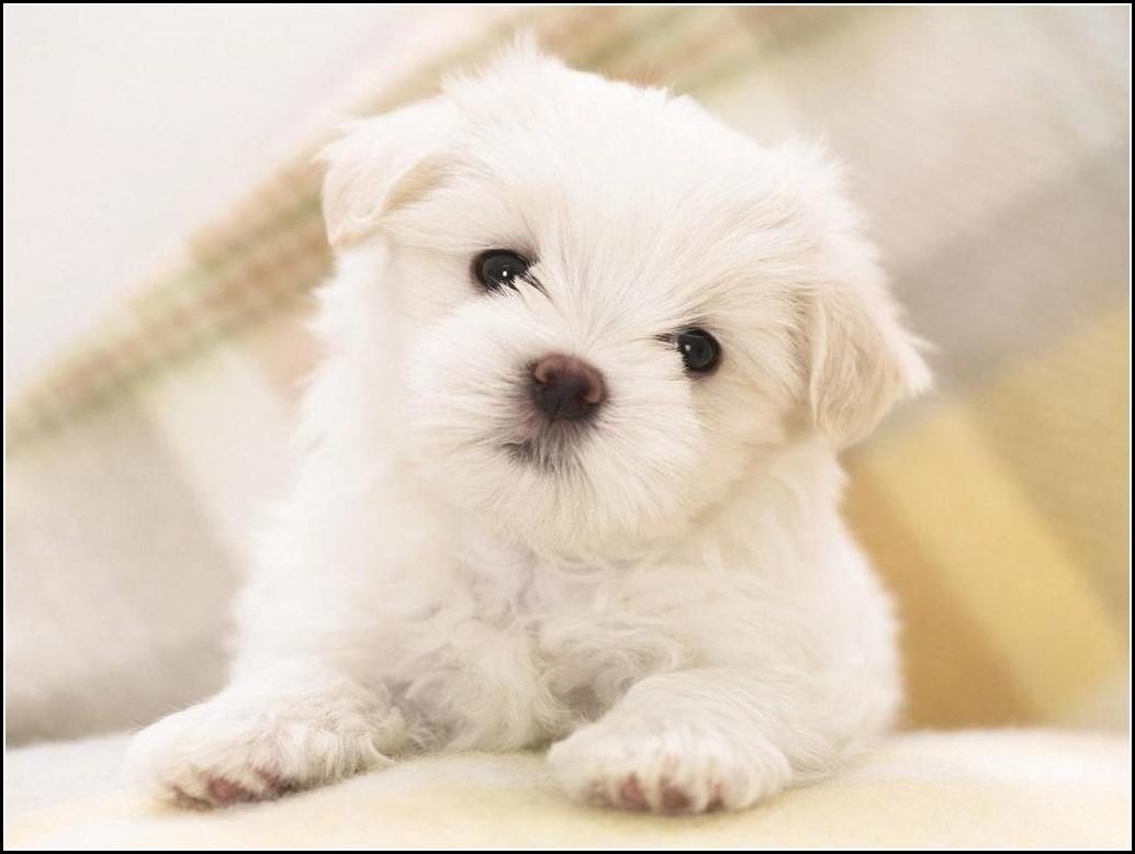 Cute Dogs Wallpaper