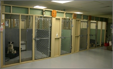 Dog Boarding Kennel Designs