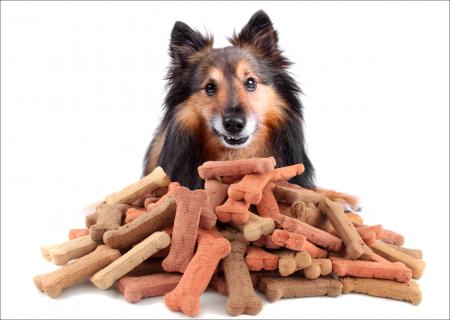 Dog Bones Images
