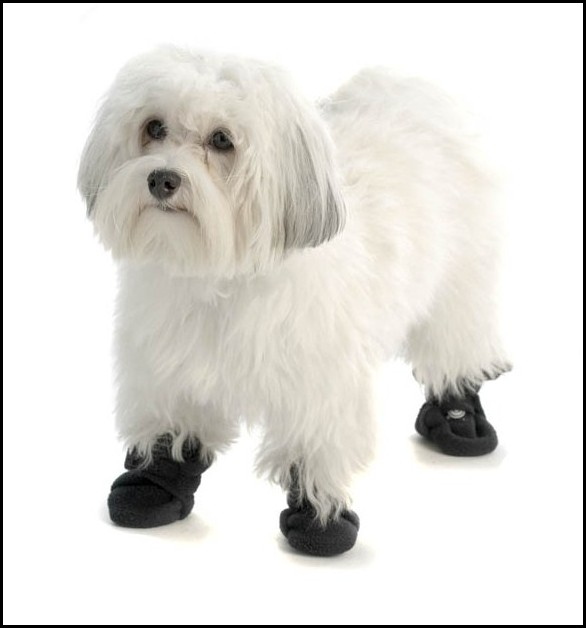 Dog Booties For Traction