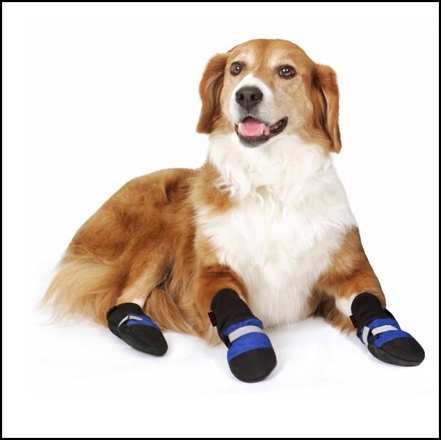 Dog Booties Petco