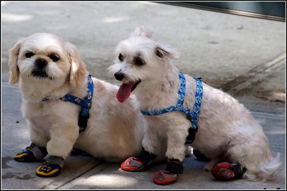 Dog Boots Australia