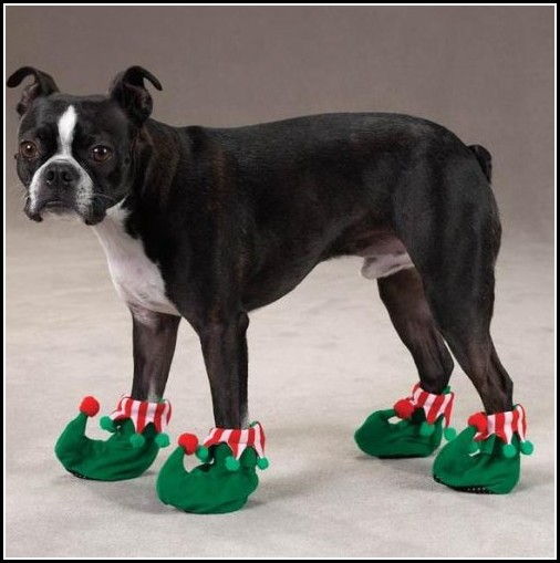 Dog Boots Images