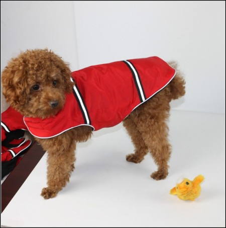 Dog Coats For Winter