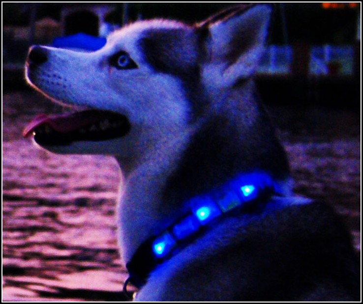 Dog Collar Light