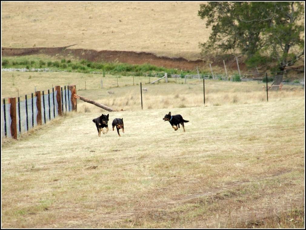 Dog Fence Australia
