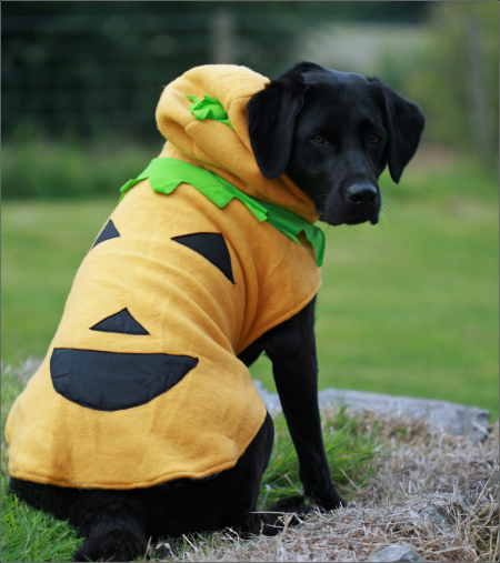 Dog Jackets For Large Dogs