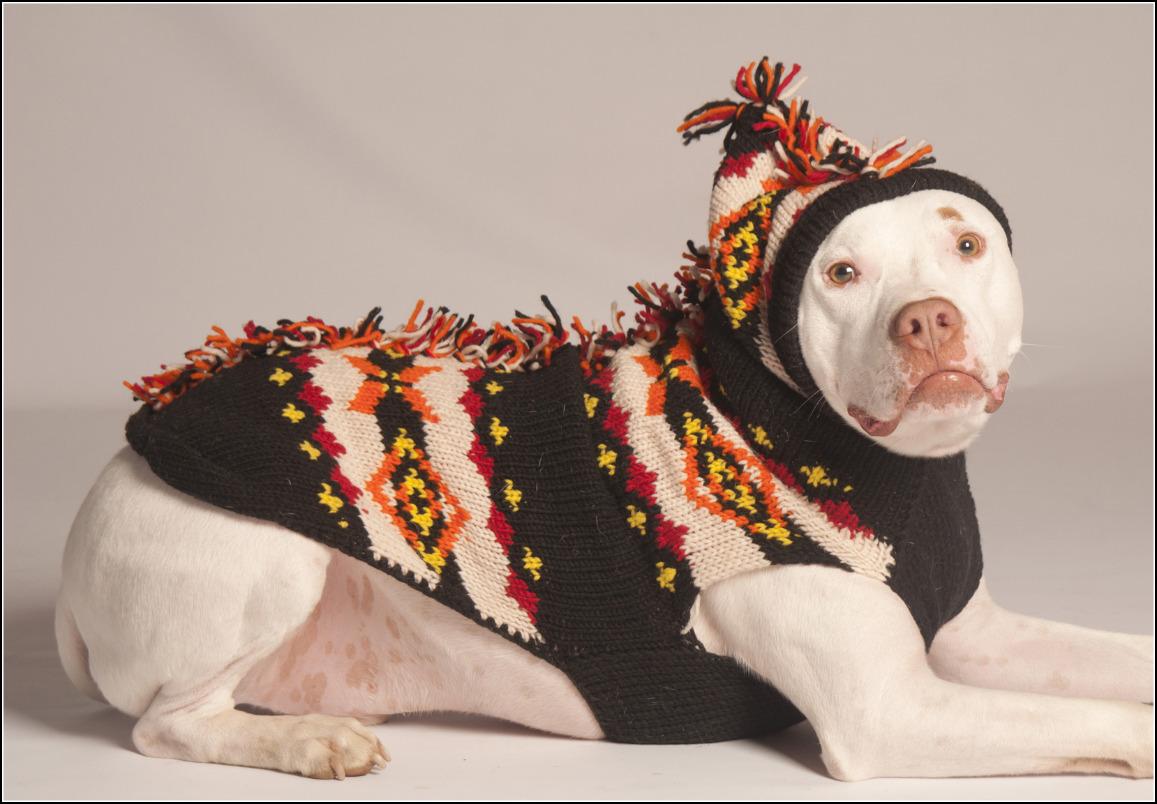 Dog Jackets For Pitbulls