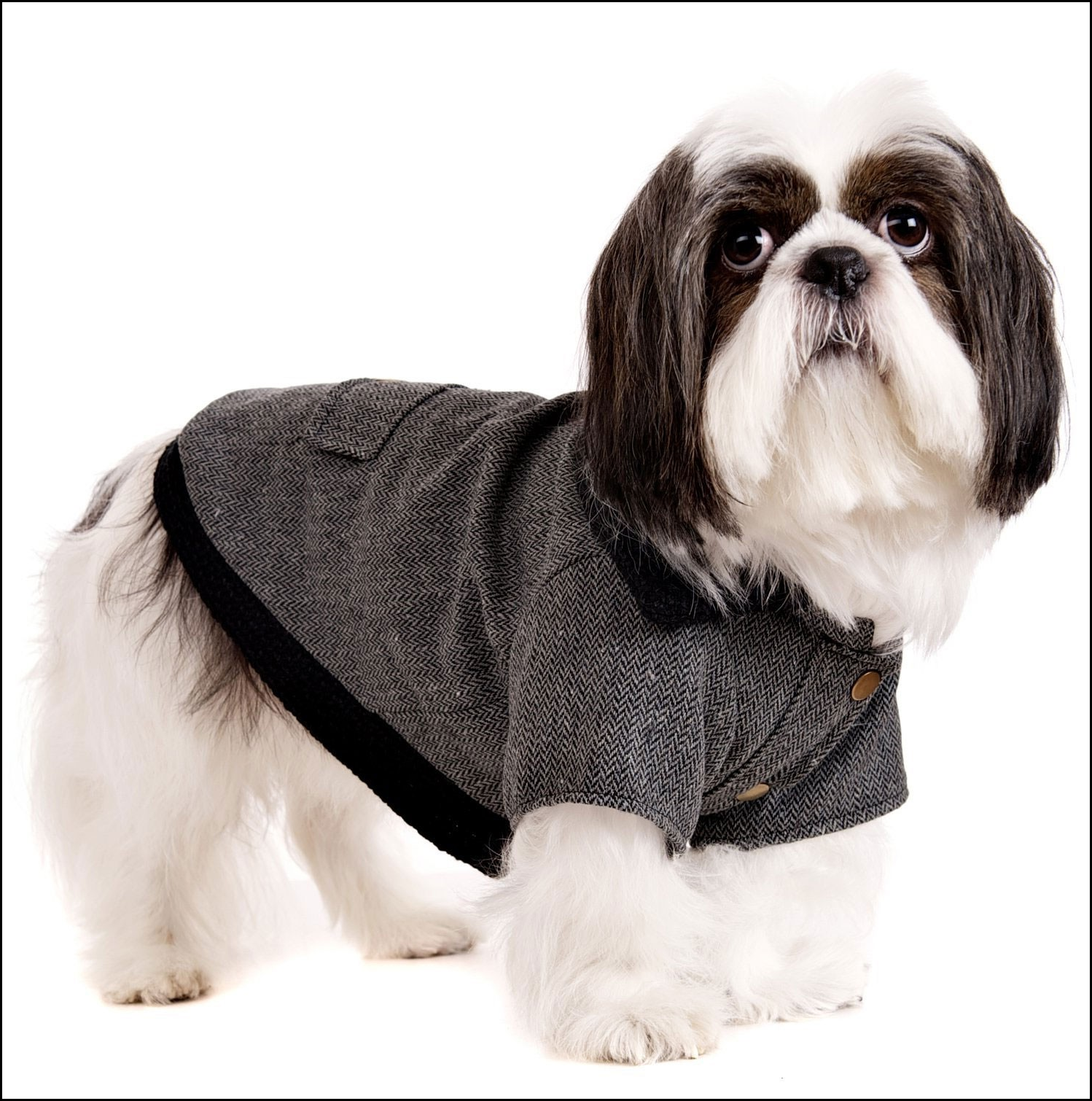 Dog Jackets Uk