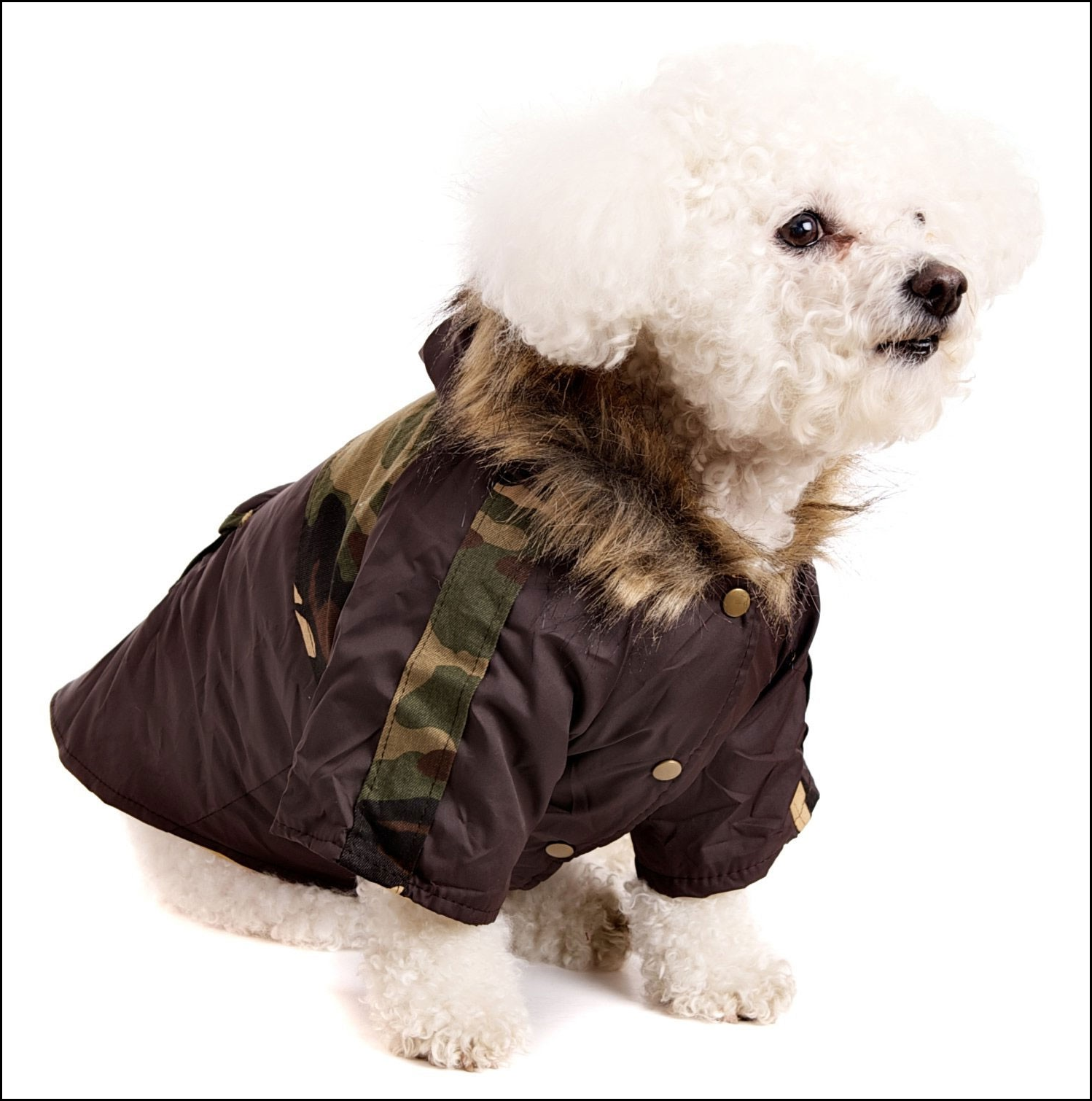 Dog Jackets With Hoods