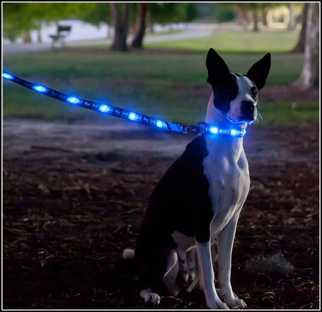 Dog Leash With Flashlight