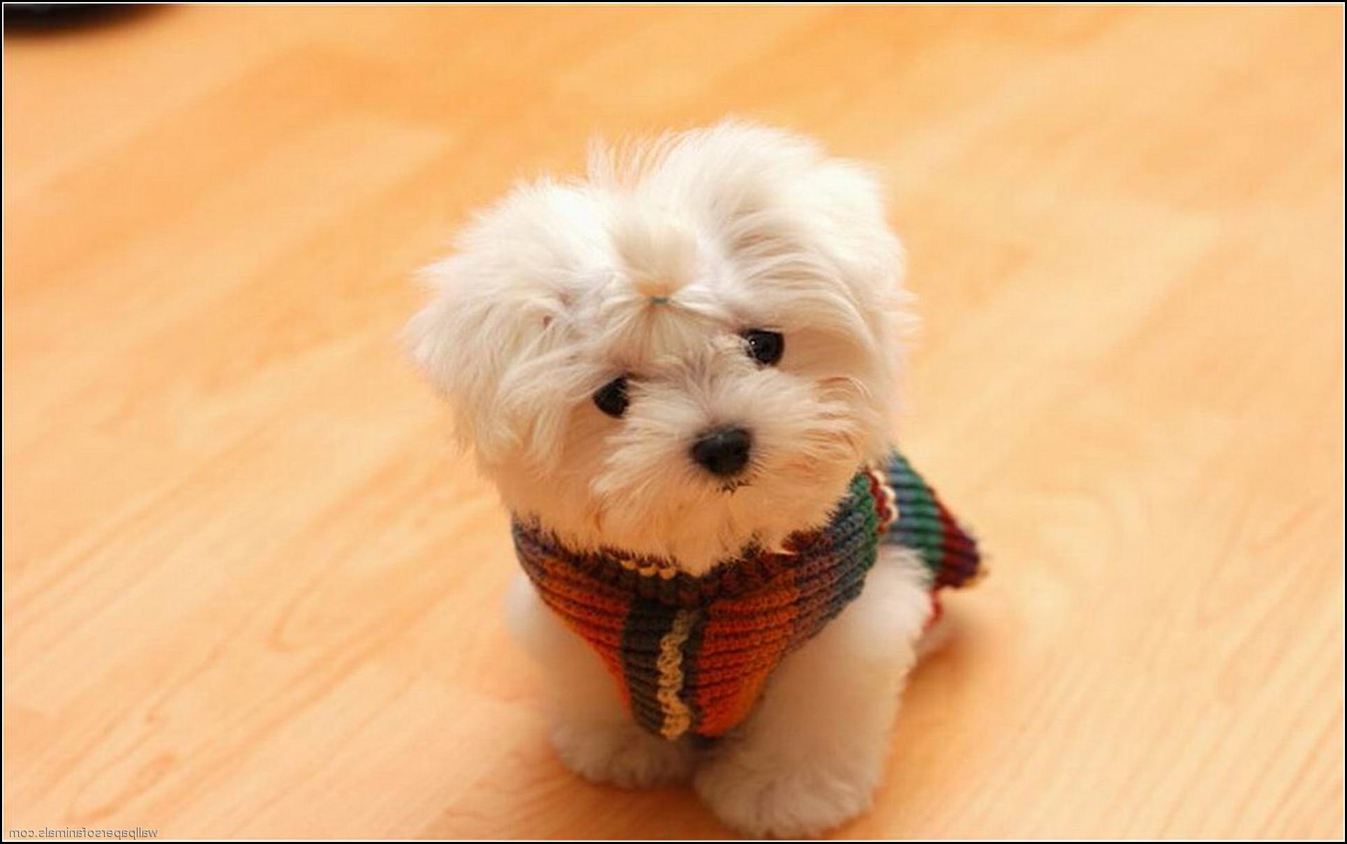 Dog Pics Cute