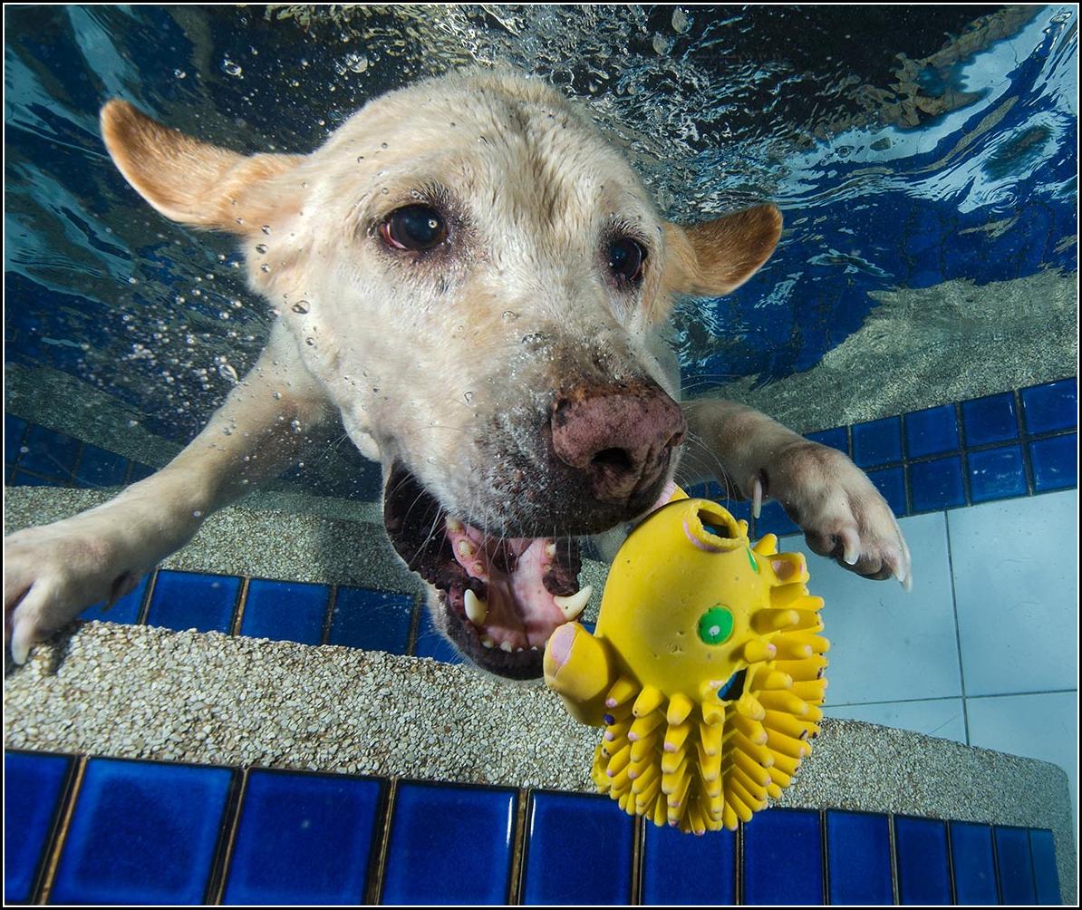 Dog Pics Underwater