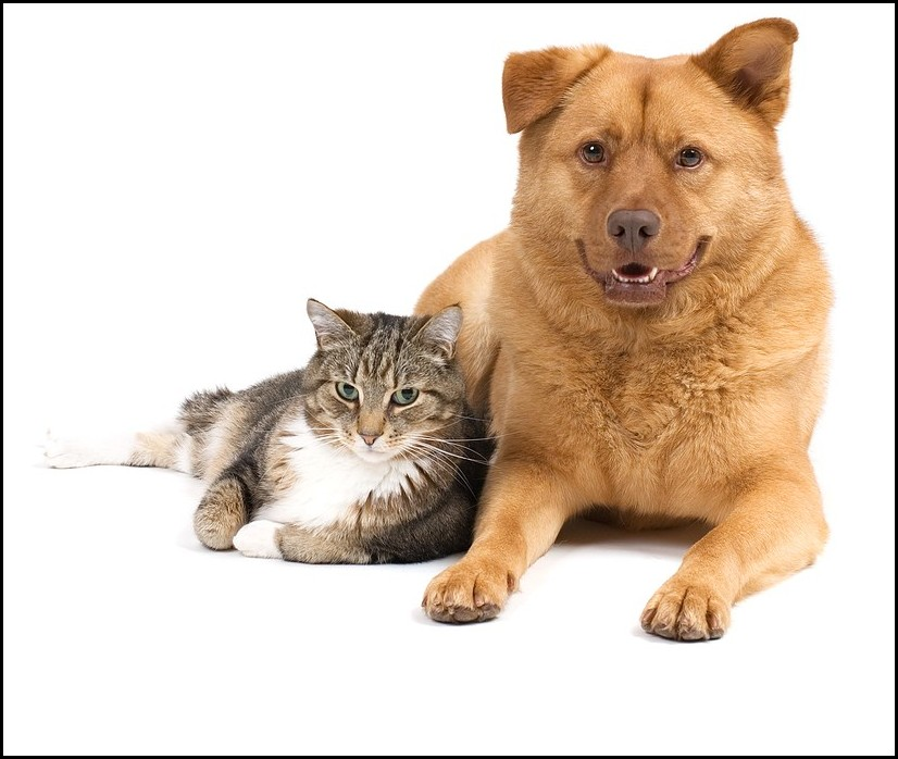 Fat Dogs And Cats
