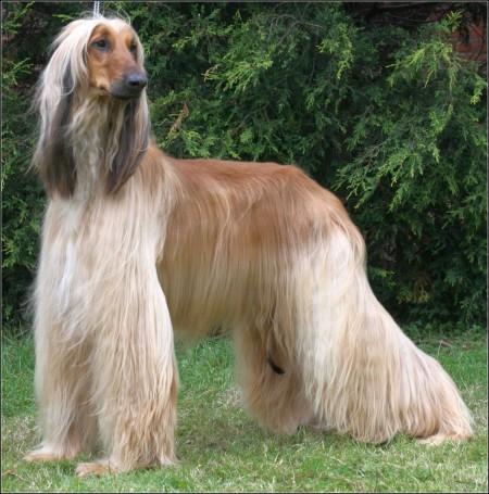 Hound Dog Pictures