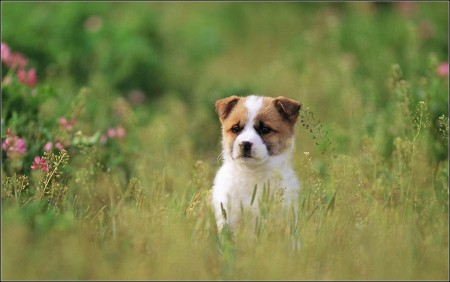 Hound Dogs Images