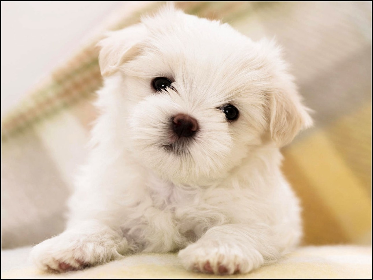 Little Dogs Breeds