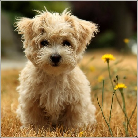 Little Dogs Images