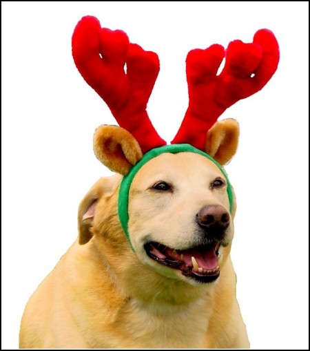 Moose Antlers For Dogs Costume