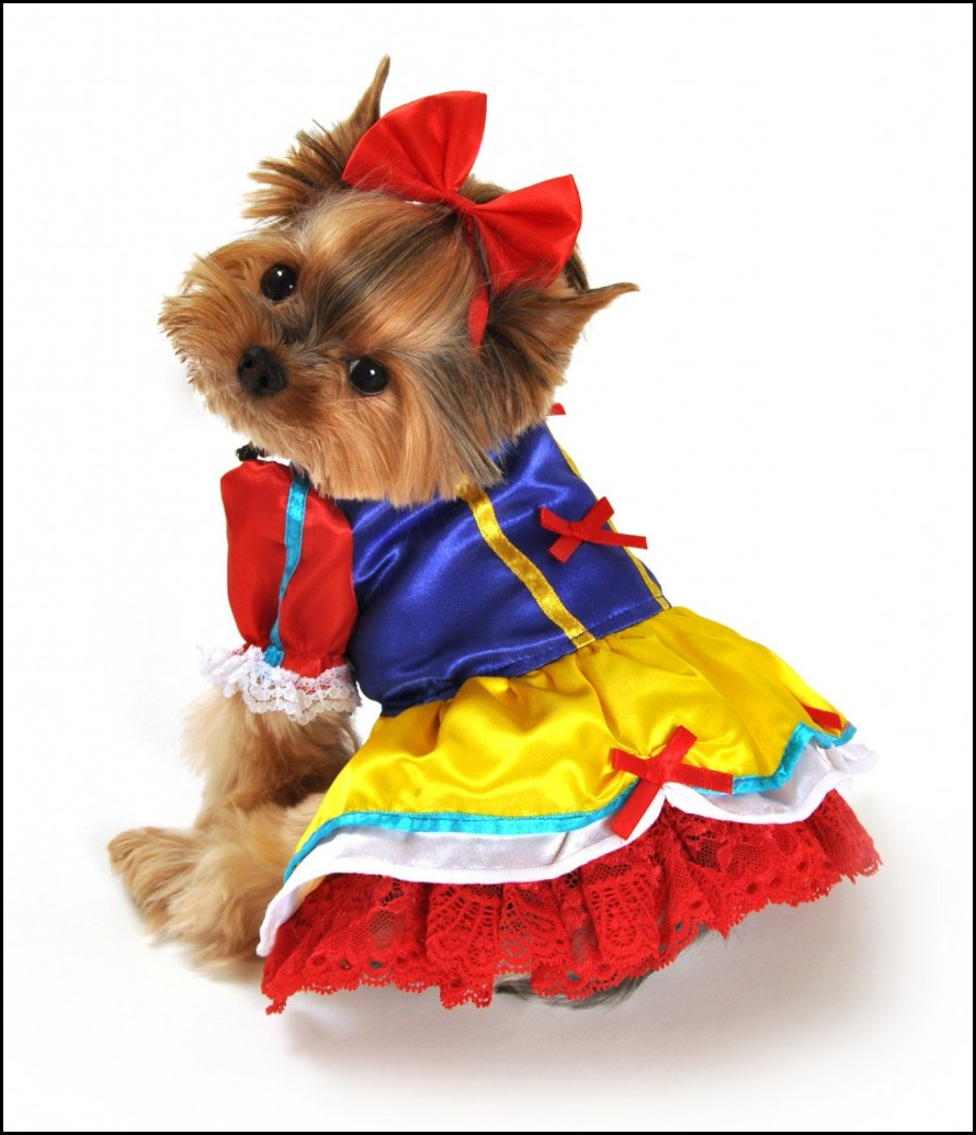 Small Dog Halloween Costumes
