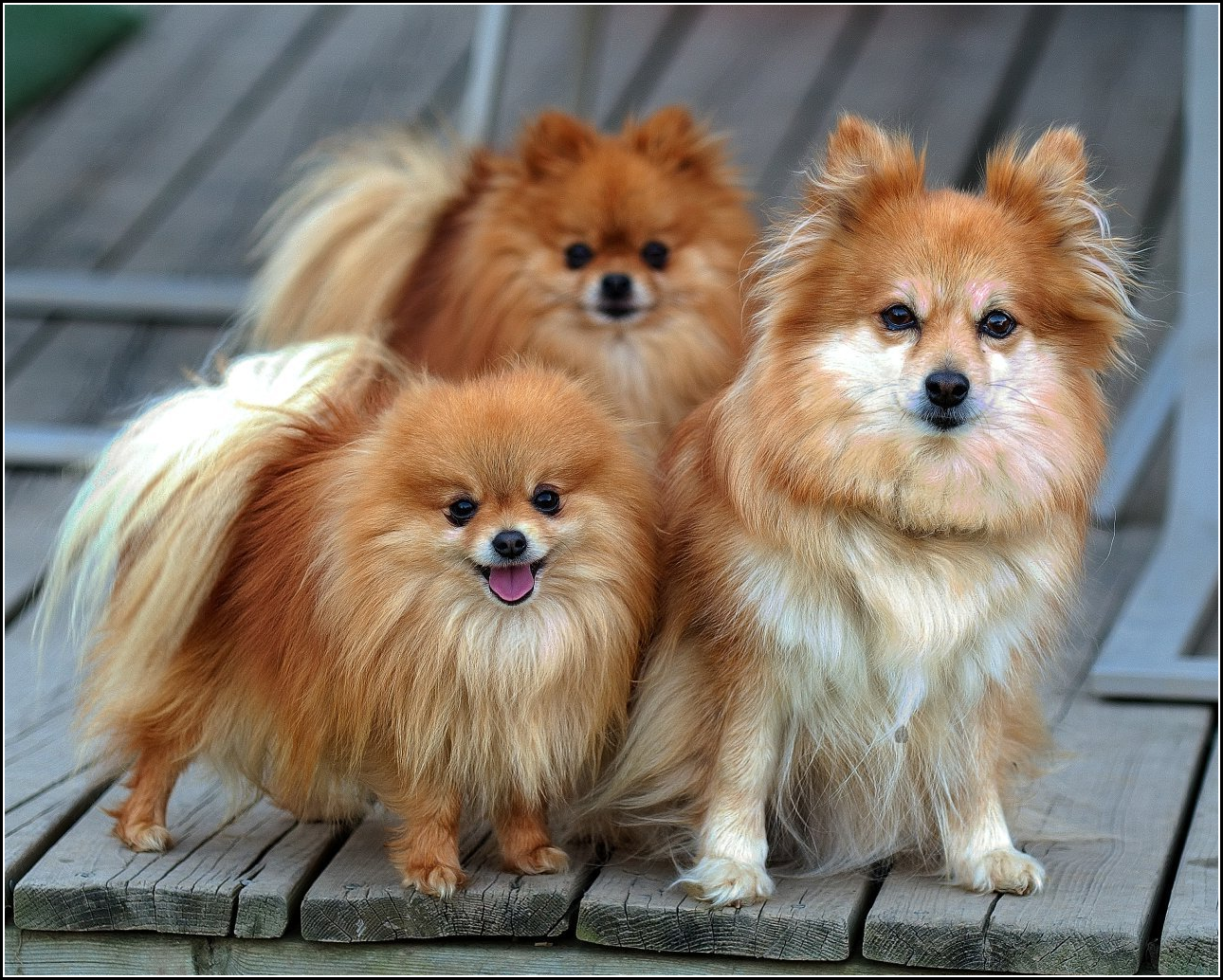 Small Dogs