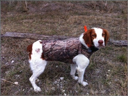 Small Hunting Dogs