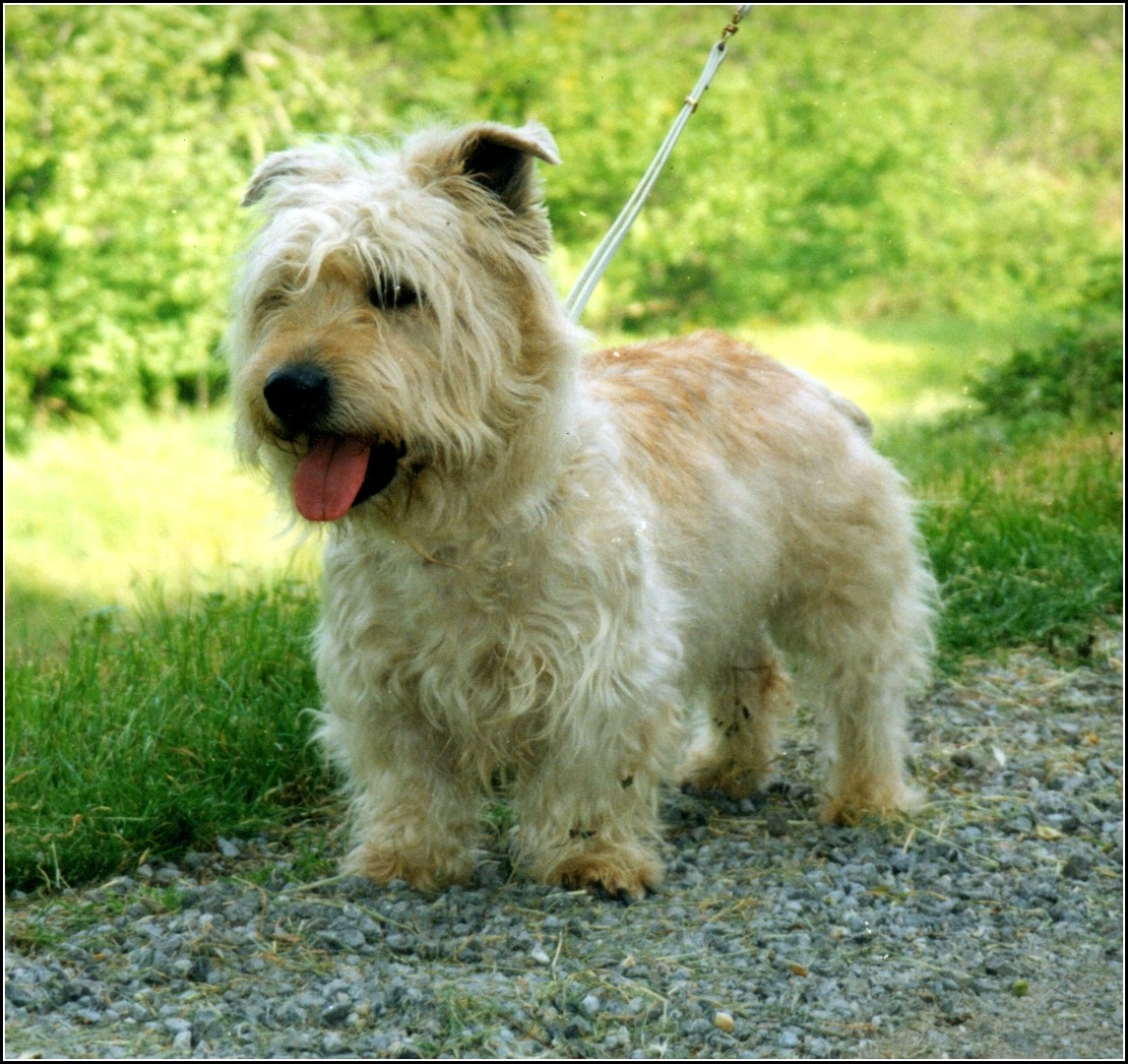 Terrier Dogs Pictures