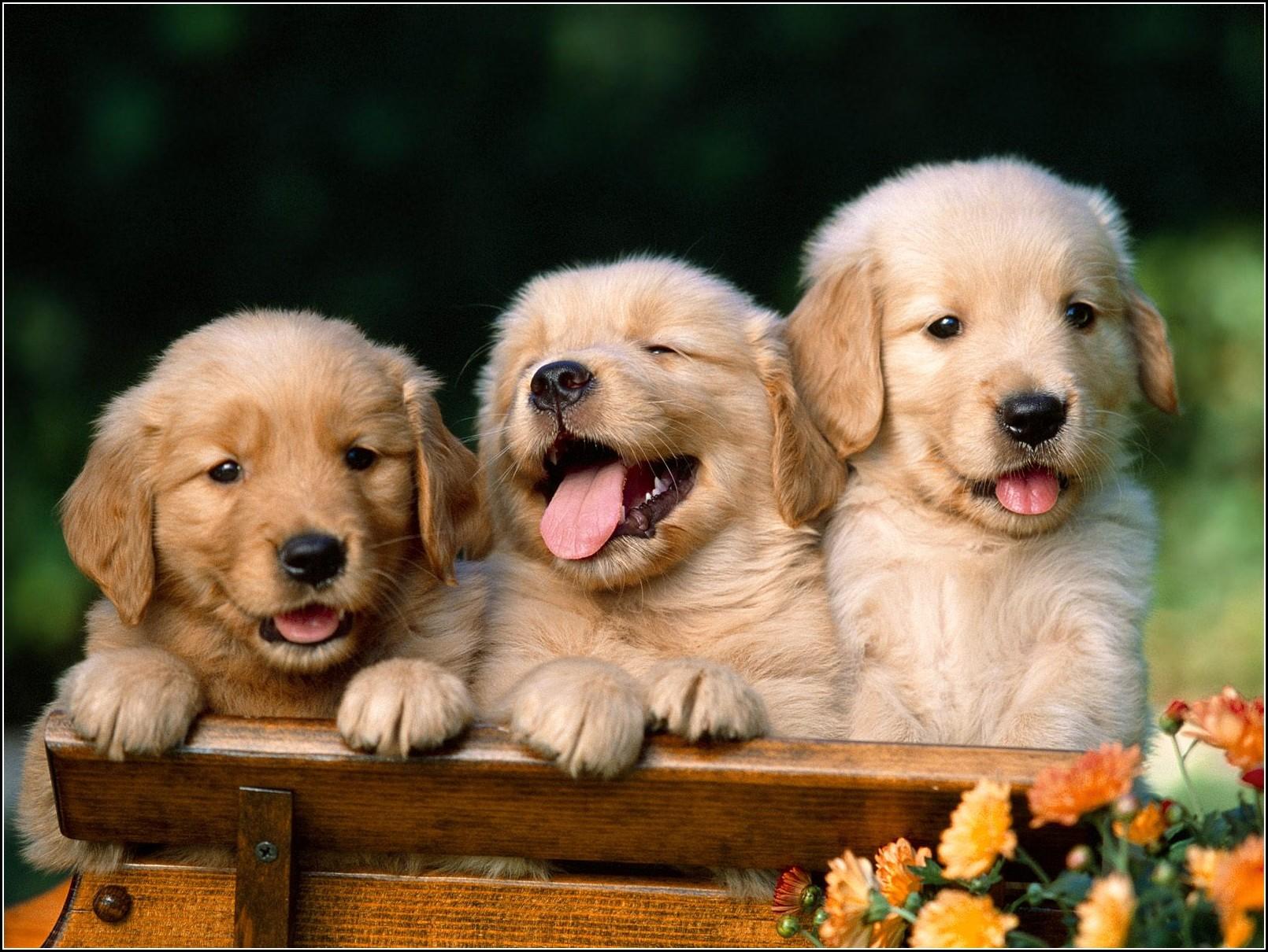 Top Dog Breeds