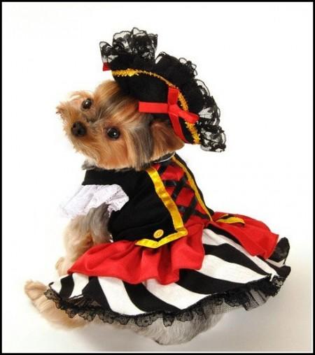 Yorkie Dog Costumes