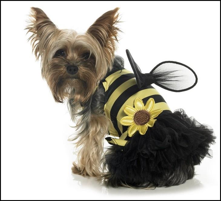 Yorkie Dog Halloween Costumes