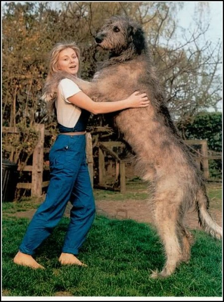 Biggest Dogs Breeds