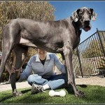 Biggest Dogs In India