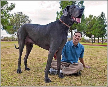 Biggest Dogs In The World 2014