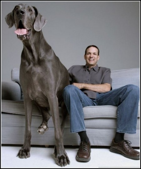 Biggest Dogs In The World Breeds