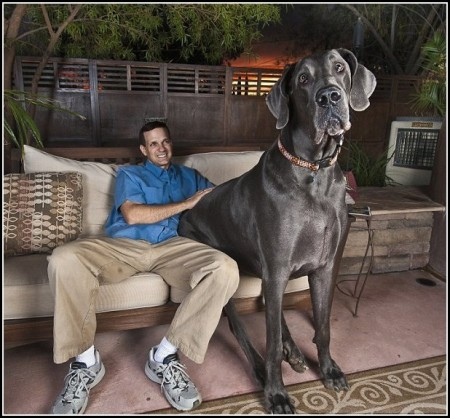Biggest Dogs Pics
