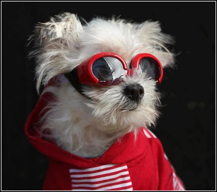 Cool Dogs With Sunglasses