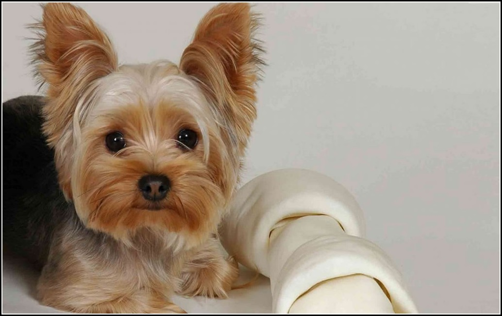 Dogs Good For Apartments Hypoallergenic