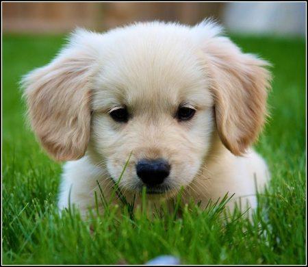 Adopt A Baby Puppy