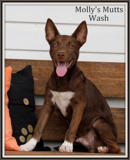 Blue Heeler Dog Wash