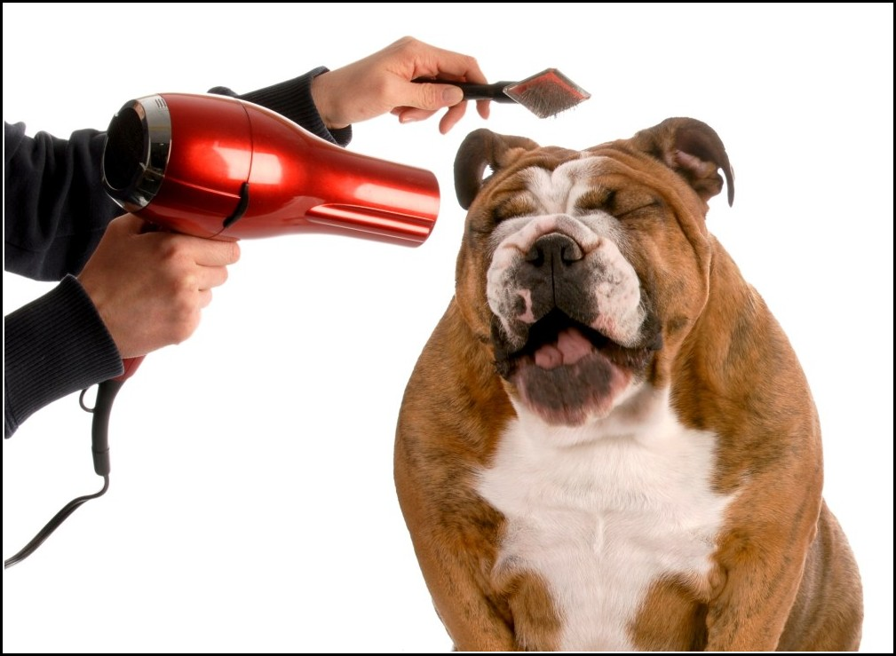 Dog Hair Dryer