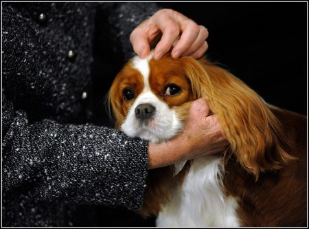 Family Friendly Dog Breeds Uk