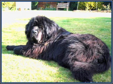 Large Dog Breeds Images