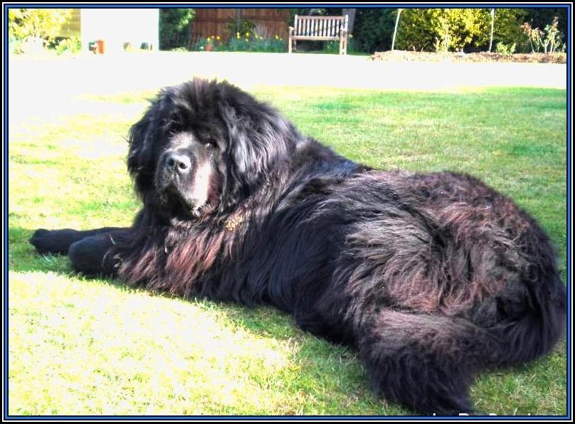 Large Dog Breeds Images